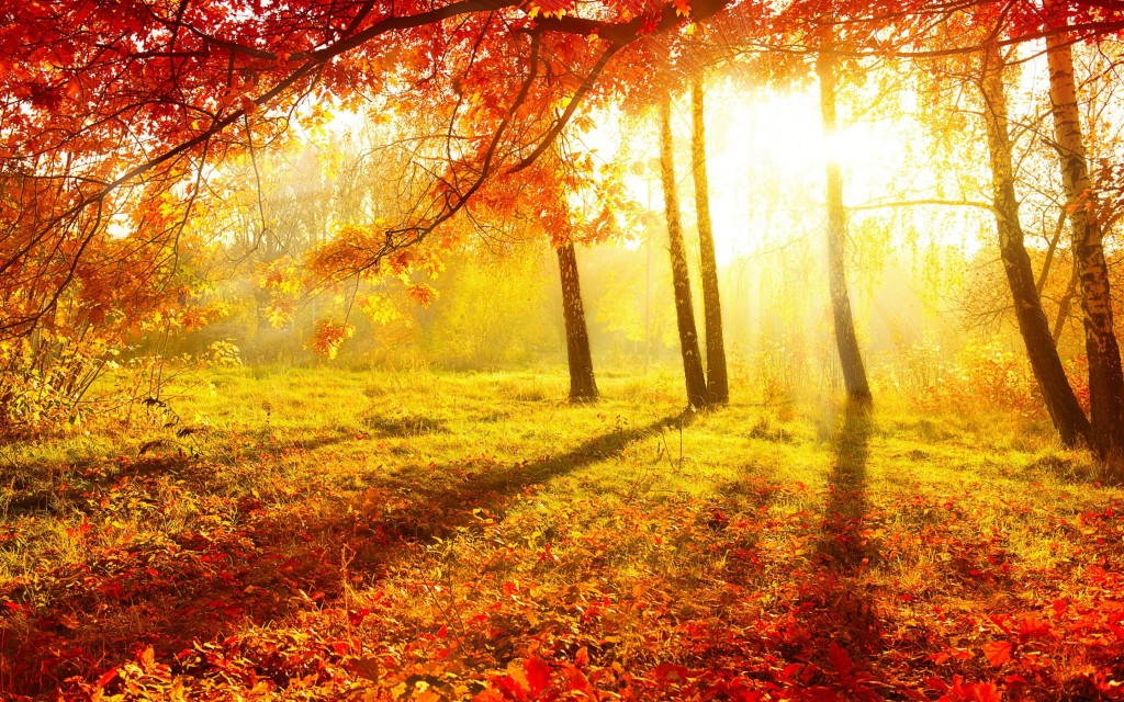 nature-trees-autumn-season-leaves-sunlight-wallpaper-1